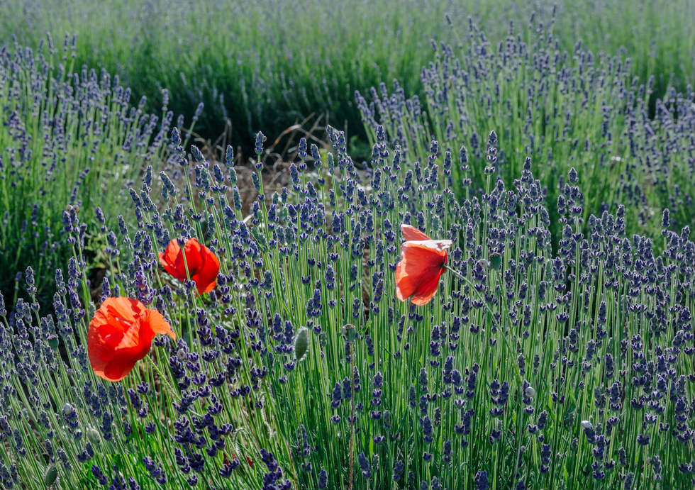 Colours of Provence (1)